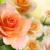 ДП64 чайная роза