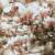 сакура бел глянец